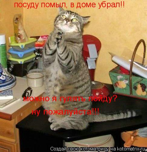 Котоматрица: посуду помыл, в доме убрал!!  можно я гулять пойду? ну пожалуйста!!!