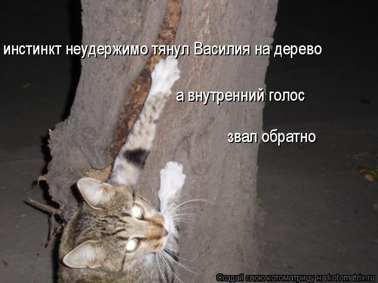 Котоматрица: инстинкт неудержимо тянул Василия на дерево а внутренний голос  звал обратно