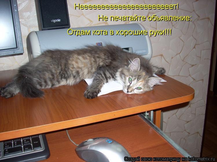 Котоматрица: Неееееееееееееееееееееет! Не печатайте обьявление: Отдам кота в хорошие руки!!!