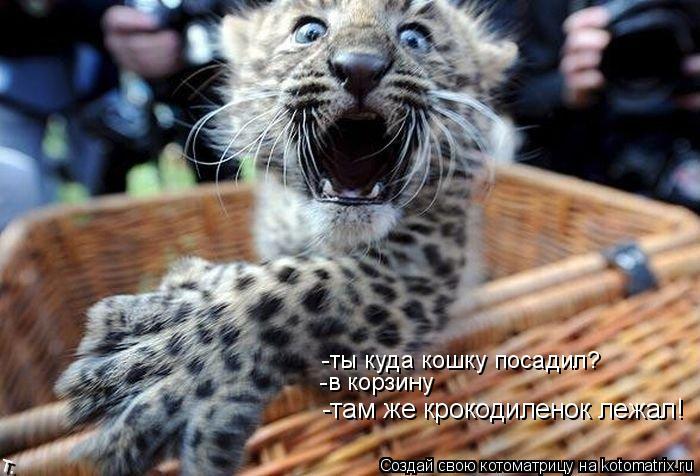 Котоматрица: -там же крокодиленок лежал! -в корзину -ты куда кошку посадил?