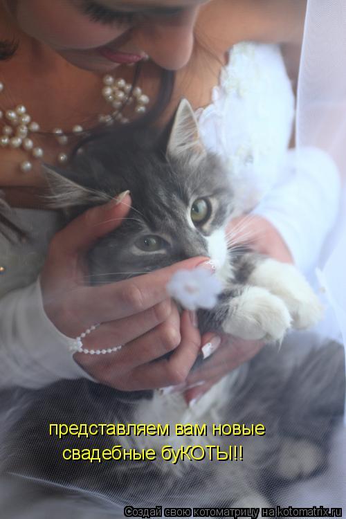 Котоматрица: свадебные буКОТЫ!! представляем вам новые