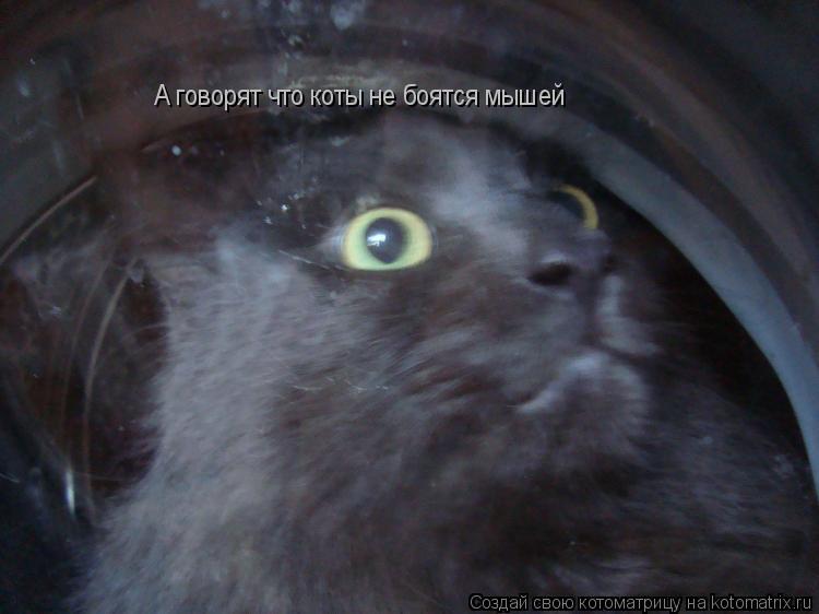 Котоматрица: А говорят что коты не боятся мышей