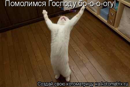Котоматрица: Помолимся Господу бо-о-о-огу!