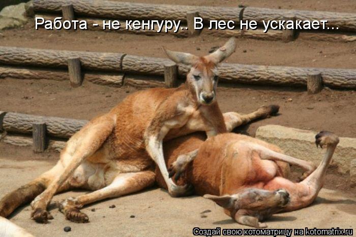 Котоматрица: Работа - не кенгуру.. В лес не ускакает...