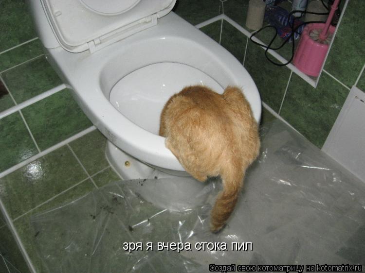 Котоматрица: зря я вчера стока пил