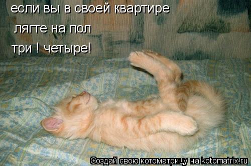 Котоматрица: если вы в своей квартире лягте на пол три ! четыре!