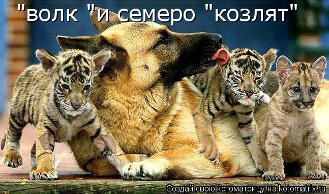 "Котоматрица: ""волк ""и семеро ""козлят"""
