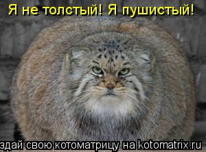 Котоматрица: Я не толстый! Я пушистый!