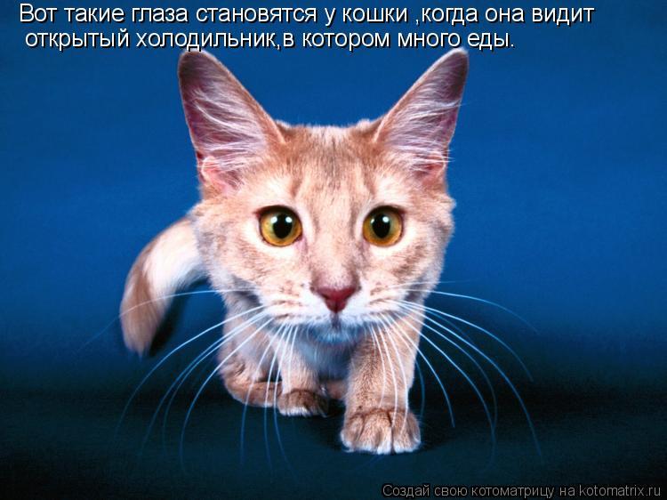 Котоматрица: Вот такие глаза становятся у кошки ,когда она видит открытый холодильник,в котором много еды.