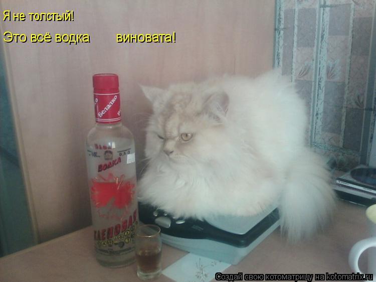 Котоматрица: Это всё водка       виновата! Я не толстый!