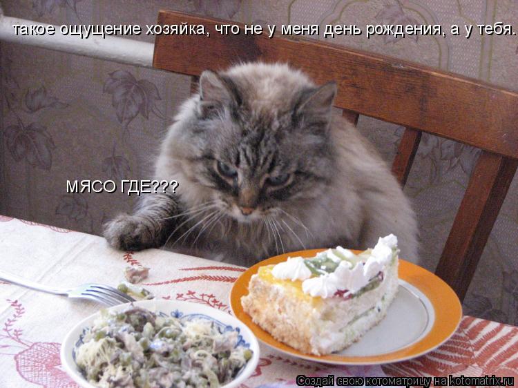 Котоматрица: такое ощущение хозяйка, что не у меня день рождения, а у тебя.  МЯСО ГДЕ???