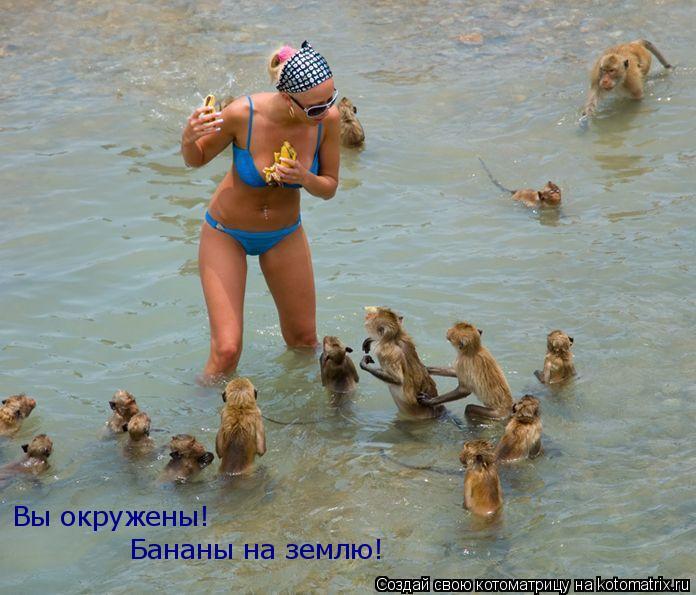 Котоматрица: Вы окружены! Бананы на землю!