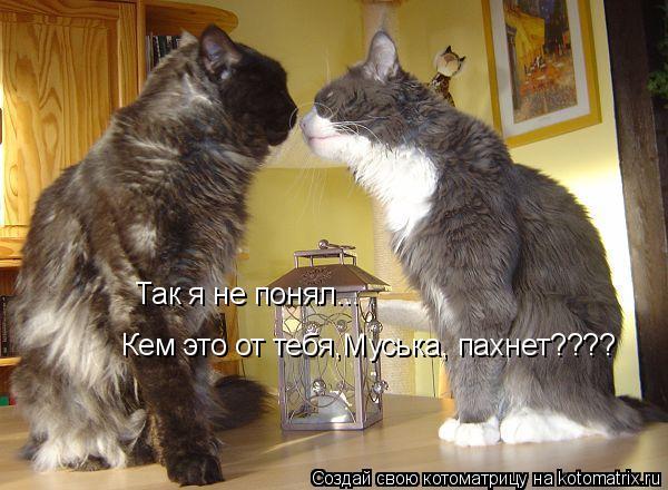 Котоматрица: Так я не понял... Кем это от тебя,Муська, пахнет????