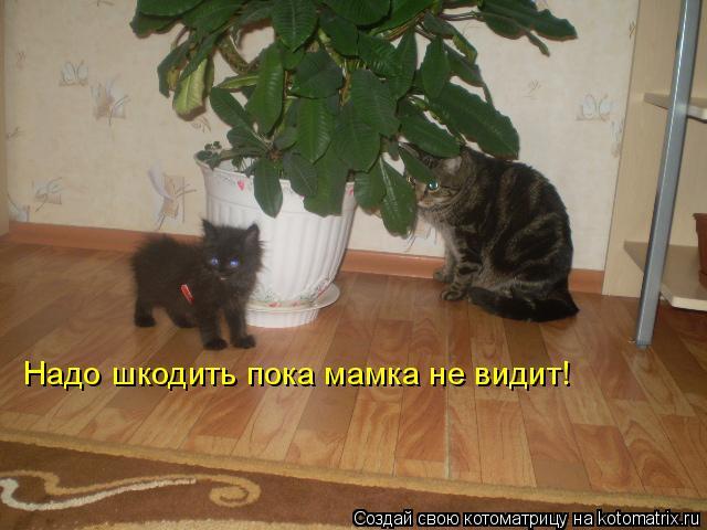 Котоматрица: Надо шкодить пока мамка не видит!