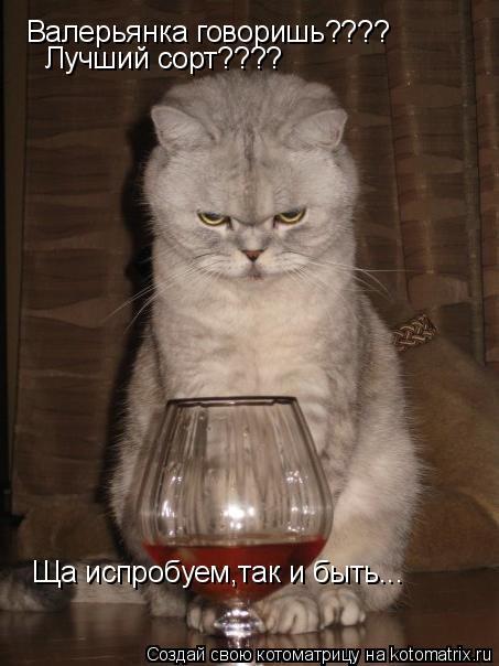 Котоматрица: Валерьянка говоришь???? Лучший сорт???? Ща испробуем,так и быть...