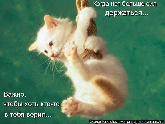 Котоматрица: Когда нет больше сил держаться... Важно,  чтобы хоть кто-то в тебя верил...