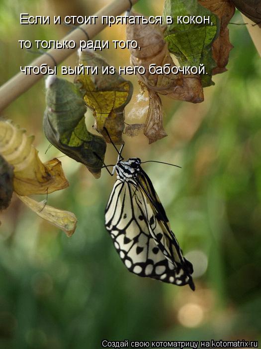 Котоматрица: Если и стоит прятаться в кокон, то только ради того, чтобы выйти из него бабочкой.