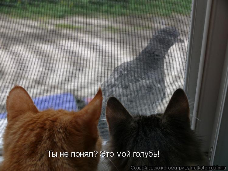 Котоматрица: Ты не понял? Это мой голубь!
