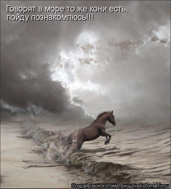 Котоматрица: Говорят в море то же кони есть, пойду познакомлюсь!!!