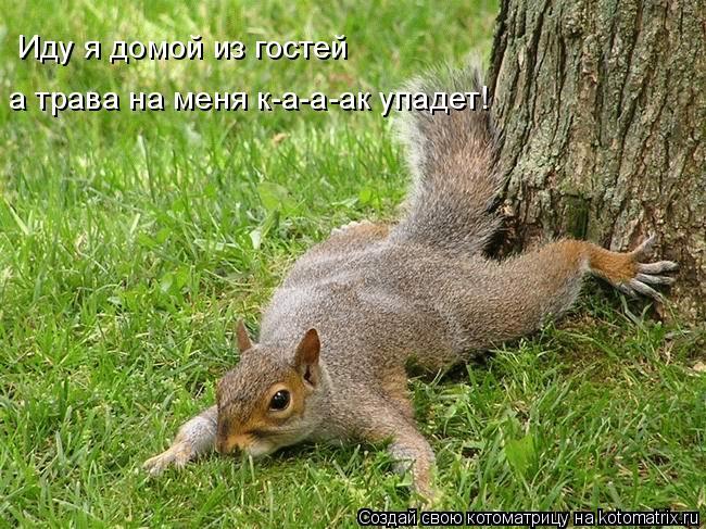 Котоматрица: а трава на меня к-а-а-ак упадет! Иду я домой из гостей