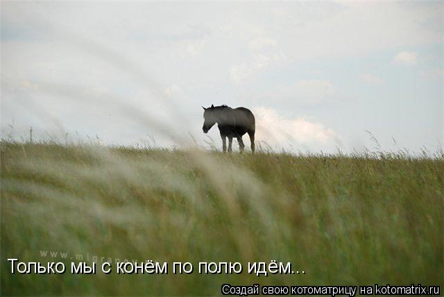 Котоматрица: Только мы с конём по полю идём...