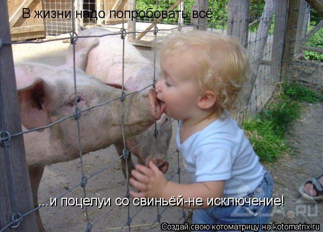 Котоматрица: В жизни надо попробовать всё... ...и поцелуи со свиньёй-не исключение!