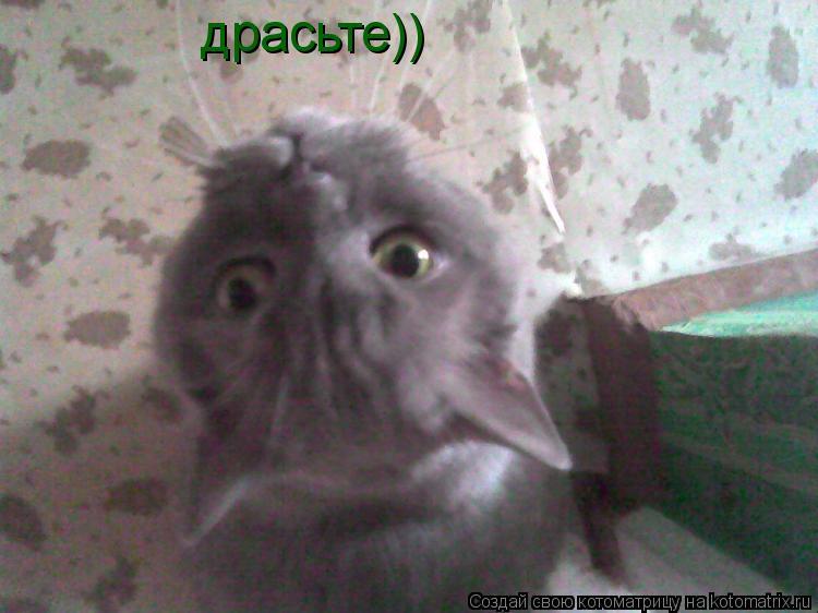 Котоматрица: драсьте))
