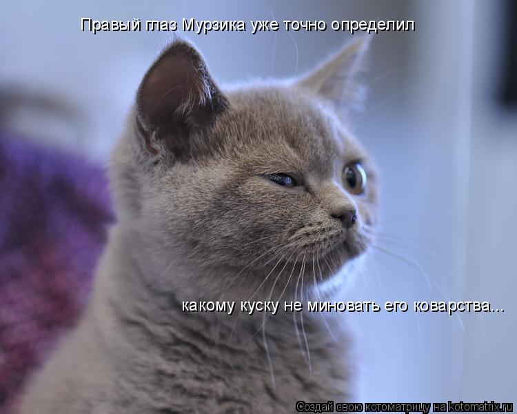 Котоматрица: Правый глаз Мурзика уже точно определил  какому куску не миновать его коварства...