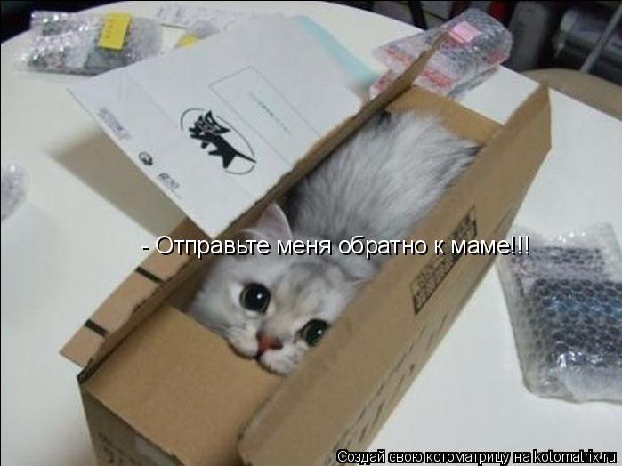 Котоматрица: - Отправьте меня обратно к маме!!!