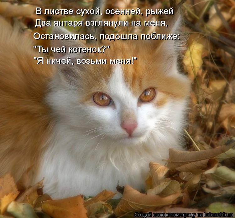 """Котоматрица: В листве сухой, осенней, рыжей Два янтаря взглянули на меня, Остановилась, подошла поближе: """"Ты чей котенок?"""" """"Я ничей, возьми меня!"""""""