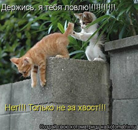 Котоматрица: Держись, я тебя ловлю!!!!!!!!!!! Нет!!! Только не за хвост!!!