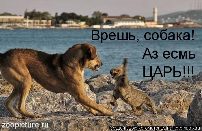 Котоматрица: Врешь, собака! Аз есмь ЦАРЬ!!!
