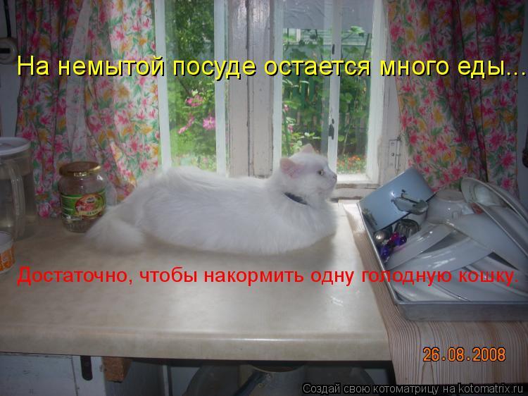 Котоматрица: На немытой посуде остается много еды... Достаточно, чтобы накормить одну голодную кошку.