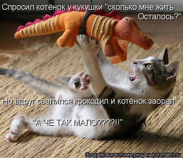 """Котоматрица: Спросил котёнок у кукушки """"сколько мне жить Осталось?"""" Но вдруг свалился крокодил и котёнок заорал """"А ЧЕ ТАК МАЛО????!!"""""""
