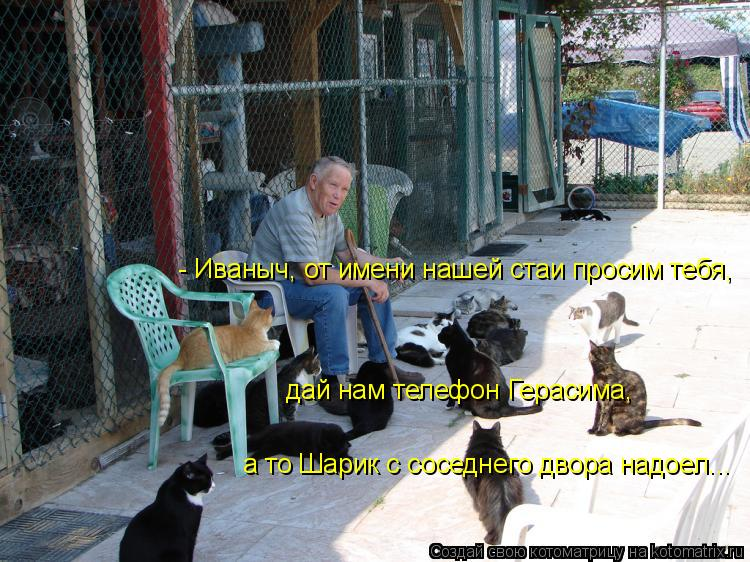 Котоматрица: - Иваныч, от имени нашей стаи просим тебя,  дай нам телефон Герасима,  а то Шарик с соседнего двора надоел...