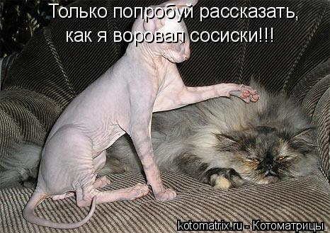Котоматрица: Только попробуй рассказать, как я воровал сосиски!!!