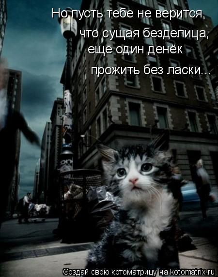 Котоматрица: что сущая безделица, прожить без ласки... ещё один денёк Но пусть тебе не верится,