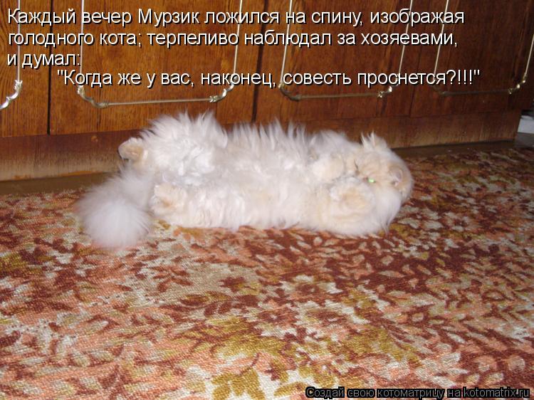 """Котоматрица: Каждый вечер Мурзик ложился на спину, изображая голодного кота; терпеливо наблюдал за хозяевами, и думал:  """"Когда же у вас, наконец, совесть п"""