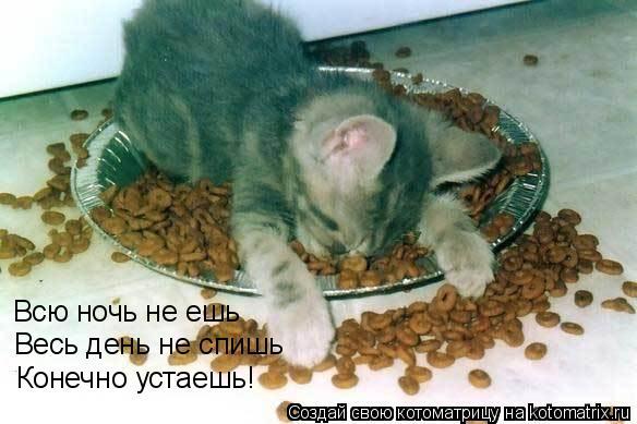 Котоматрица: Всю ночь не ешь Весь день не спишь Конечно устаешь!