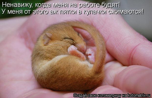 Котоматрица: Ненавижу, когда меня на работе будят! У меня от этого аж пятки в кулачки сжимаются!