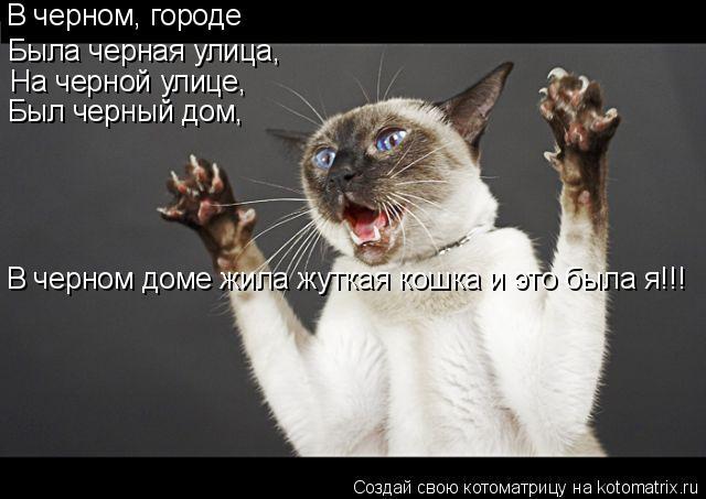Котоматрица: В черном, городе Была черная улица, На черной улице,  Был черный дом, В черном доме жила жуткая кошка и это была я!!!