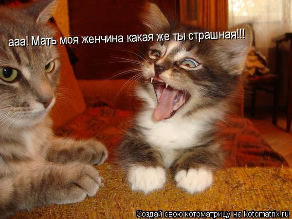 Котоматрица: ааа! Мать моя женчина какая же ты страшная!!!
