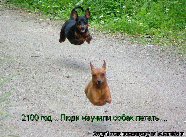 Котоматрица: 2100 год... Люди научили собак летать....
