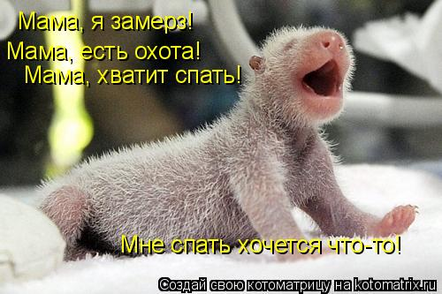 Котоматрица: Мама, я замерз! Мама, есть охота! Мама, хватит спать! Мне спать хочется что-то!