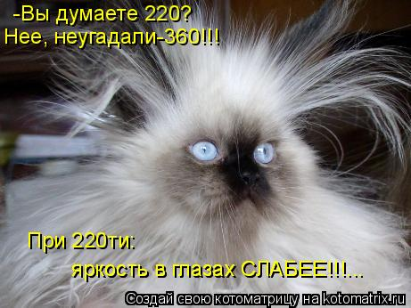 Котоматрица: -Вы думаете 220? Нее, неугадали-360!!! При 220ти: яркость в глазах СЛАБЕЕ!!!... яркость в глазах СЛАБЕЕ!!!...