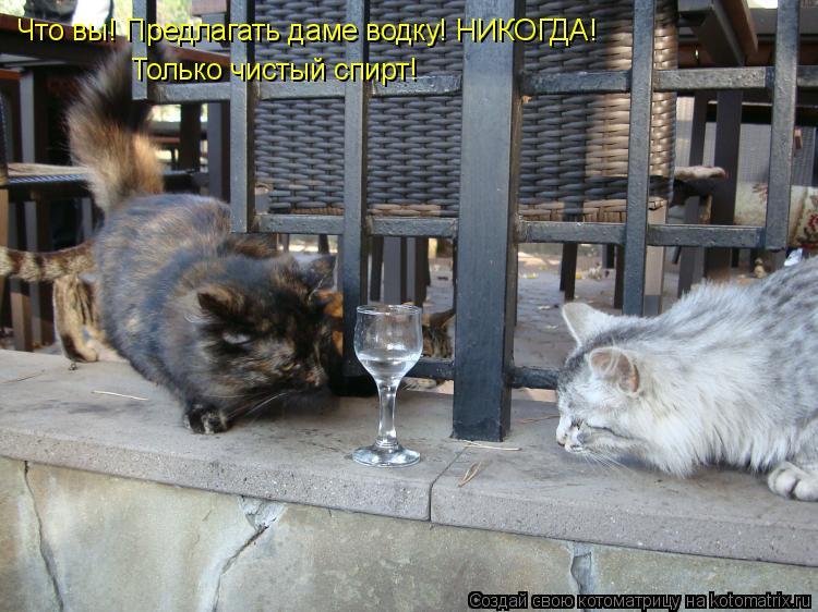 Котоматрица: Что вы! Предлагать даме водку! НИКОГДА! Только чистый спирт!