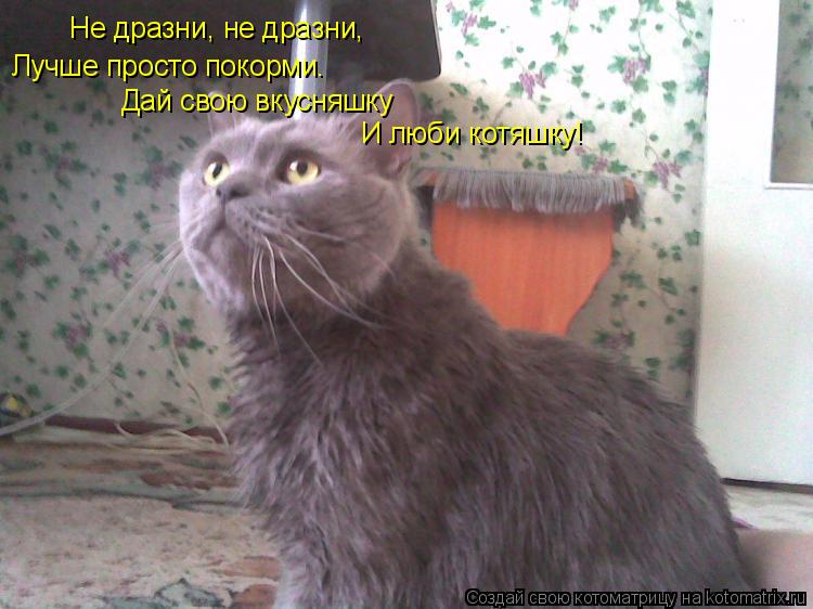 Котоматрица: Не дразни, не дразни, Лучше просто покорми. Дай свою вкусняшку И люби котяшку!