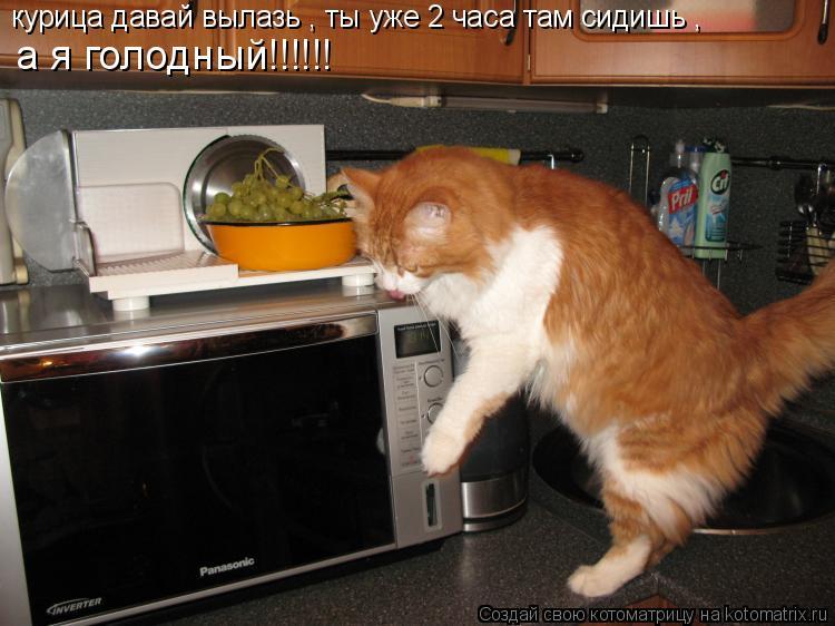 Котоматрица: курица давай вылазь , ты уже 2 часа там сидишь , а я голодный!!!!!!