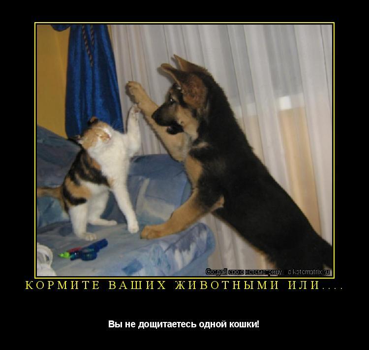 Котоматрица: кормите ваших животными или.... Вы не дощитаетесь одной кошки!