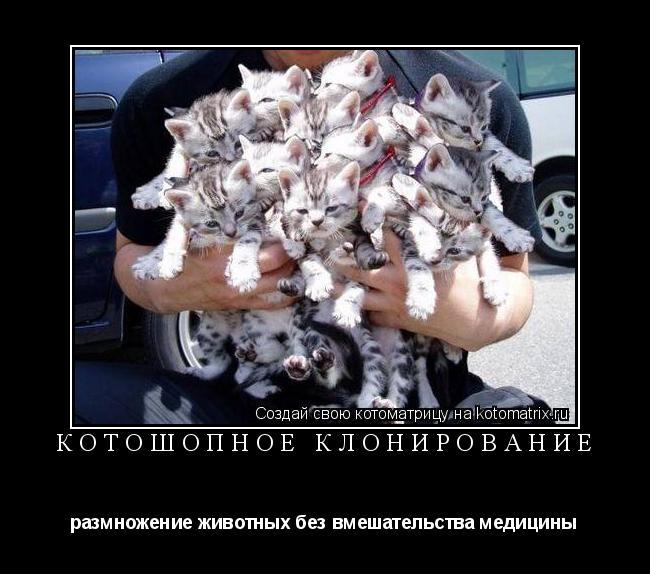 Котоматрица: КОТОШОПное клонирование размножение животных без вмешательства медицины